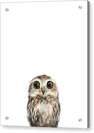 Little Owl Acrylic Print by Amy Hamilton