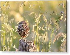 Little Owl Big World Acrylic Print by Roeselien Raimond