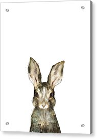 Little Rabbit Acrylic Print by Amy Hamilton