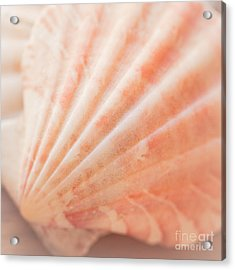 Little Seashell Acrylic Print by Ana V Ramirez