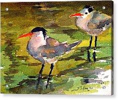 Little Terns Acrylic Print by Julianne Felton