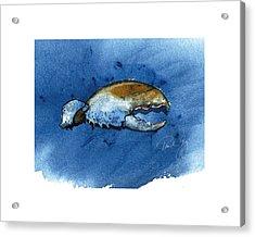 Lobster Claw Acrylic Print by Paul Gaj