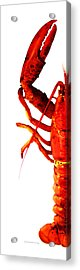 Lobster - The Left Side Acrylic Print by Sharon Cummings