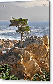 Lone Cypress - The Icon Of Pebble Beach California Acrylic Print by Christine Till