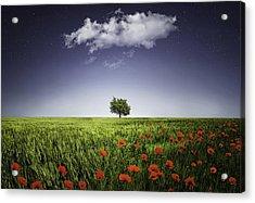 Lone Tree A Poppies Field Acrylic Print by Bess Hamiti