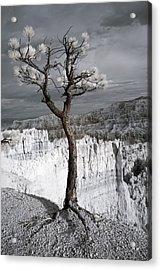 Lone Tree Canyon Acrylic Print by Mike Irwin