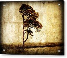 Lone Tree Acrylic Print by Julie Hamilton