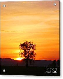 Lone Tree Sunset Acrylic Print by Nick Gustafson