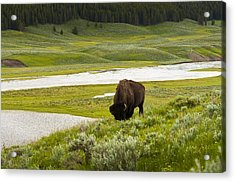 Lonely Bison Valley Acrylic Print by Chad Davis