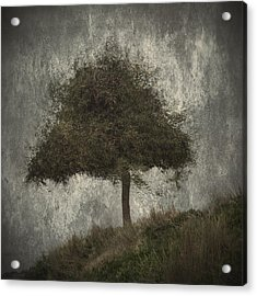 Lonely Tree Acrylic Print by Stelios Kleanthous