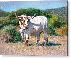 Longhorn Bull Acrylic Print by Sue Halstenberg