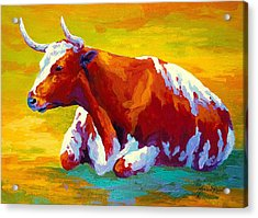 Longhorn Cow Acrylic Print by Marion Rose