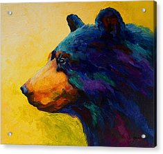 Looking On II - Black Bear Acrylic Print by Marion Rose