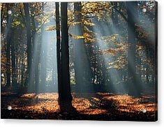 Lost In The Light Acrylic Print by Roeselien Raimond