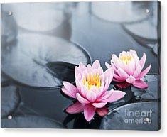 Lotus Blossoms Acrylic Print by Elena Elisseeva