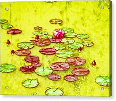 Lotus Flower On The Water 2 Acrylic Print by Lanjee Chee