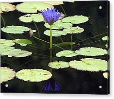 Lotus Flower Reflection Acrylic Print by Kristin Smith