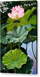 Lotus Rising Acrylic Print by John Lautermilch