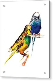 Love Birds Acrylic Print by Anil Nene