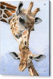 Love From Above Acrylic Print by Sarah Batalka