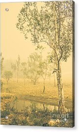 Lovely Foggy Woodland Acrylic Print by Jorgo Photography - Wall Art Gallery