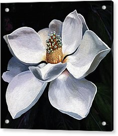 Lovely In White - Painting Magnolia Flower  Acrylic Print by Linda Apple