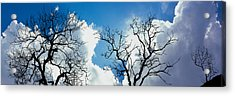 Low Angle View Of Trees Against Cloudy Acrylic Print by Panoramic Images