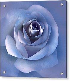 Luminous Lavender Rose Flower Acrylic Print by Jennie Marie Schell