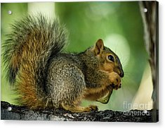 Lunch Acrylic Print by Robert Bales