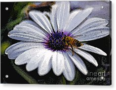 Lunchtime  Acrylic Print by Juls Adams