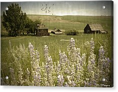 Lupine Homestead Acrylic Print by Melisa Meyers