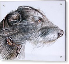 Lurcher Acrylic Print by Mary Mayes