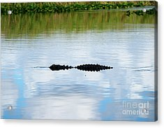 Lurking Acrylic Print by Cheryl Young