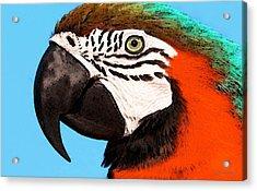 Macaw Bird - Rain Forest Royalty Acrylic Print by Sharon Cummings