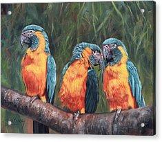 Macaws Acrylic Print by David Stribbling