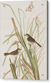 Macgillivray's Finch  Acrylic Print by John James Audubon