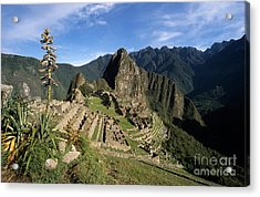 Machu Picchu And Bromeliad Acrylic Print by James Brunker