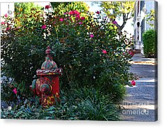 Madison Fire Hydrant Acrylic Print by Amy Lucid