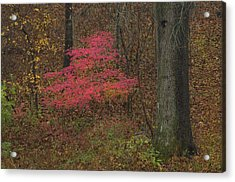 Magenta Tree In Woods Acrylic Print by Don Wolf