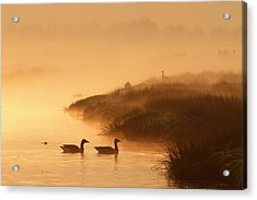 Magical Misty  Morning Acrylic Print by Roeselien Raimond
