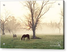 Magical Morning Acrylic Print by Scott Pellegrin