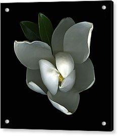 Magnolia Acrylic Print by Christian Slanec