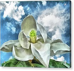 Magnolia Dreams Acrylic Print by Wendy J St Christopher
