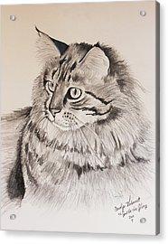 Maine Coon Cat Dusty Acrylic Print by Carolyn Valcourt