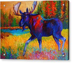 Majestic Monarch - Moose Acrylic Print by Marion Rose