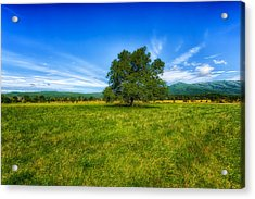 Majestic White Oak Tree In Cades Cove - 3 Acrylic Print by Frank J Benz