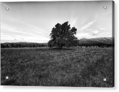 Majestic White Oak Tree In Cades Cove - 4 Acrylic Print by Frank J Benz