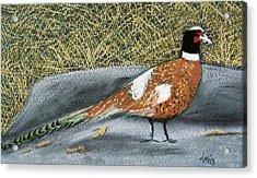 Male Pheasant Acrylic Print by Jan Amiss
