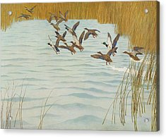Mallards In Autumn Acrylic Print by Newell Convers Wyeth