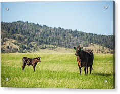 Mama And Her Calf Acrylic Print by Todd Klassy